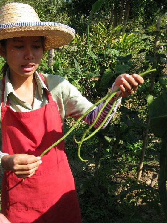 Thai Farm Cooking School Garden