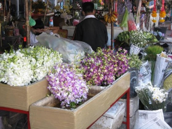 Chiang Mai flower market thailand or japan
