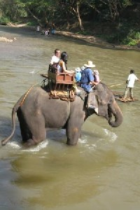 A typical elephant ride in Thailand
