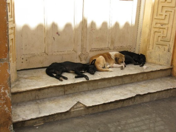 Three stray dogs trying to stay out of the heat in Brazil.