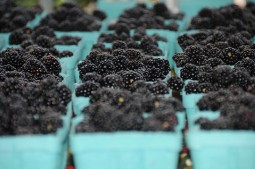 Blackberries at the Harrisonburg Farmers Market