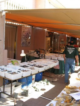 Vendors along hotel row at the Tucson Gem and Mineral Show