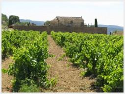 Vineyards in Cote du Rhone region of France