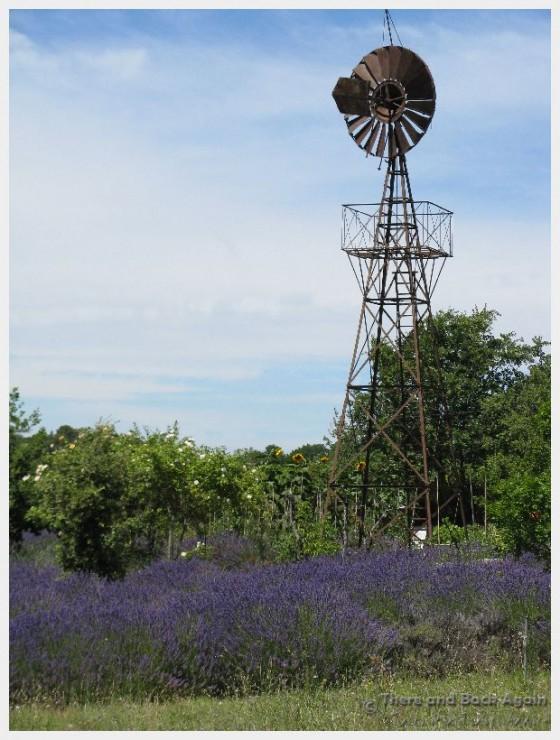 Lavender, Cote du Rhone, France