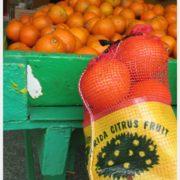 Florida Citrus 2