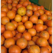 Florida Citrus 3