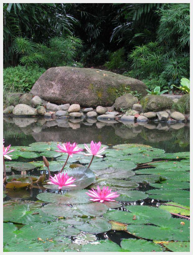 Singapore Garden Lilly