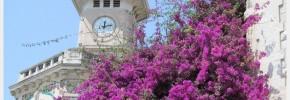 Flowers In Nice France